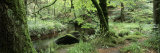 Stream Passing Through a Forest, Huelgoat Forest, Huelgoat, Brittany, France Lámina fotográfica por Panoramic Images,