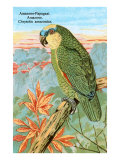 Amazon Parrot Poster