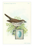 Wood Thrush and Egg Affiches
