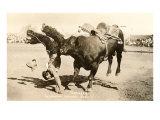 Bull Throwing Rodeo Rider Stampe