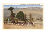 Smoke Tree Ranch, Palm Springs, California Kunstdrucke