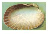 Generic Clam Shell Lámina giclée prémium