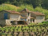 Exterior of a Stone Farmhouse in Vineyard Near Pierrefeu, Var, Provence, France, Europe Reproduction photographique par Michael Busselle