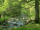 Afon Artro Passing Through Natural Oak Wood, Llanbedr, Gwynedd, Wales, United Kingdom, Europe Reproduction photographique par Pearl Bucknall