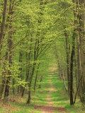 Narrow Path Through the Trees, Forest of Brotonne, Near Routout, Haute Normandie, France Reproduction photographique par Michael Busselle