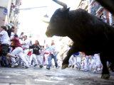 Running of the Bulls, San Fermin Festival, Pamplona, Navarra, Spain, Europe Impressão fotográfica por Marco Cristofori