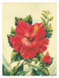 Red Hibiscus, Hawaiian Tropical Flower Plakater av Ted Mundorff