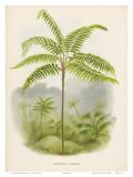Tree Fern, 18th Century Posters par Pieter De Pannemaeker