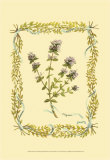 Thyme Prints by Wendy Russell