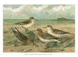 Shore Gathering III Prints by Franz Eugen Kohler