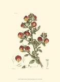 Antique Floral Plate I Pôsteres