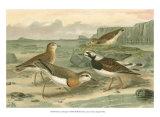 Shore Gathering I Prints by Franz Eugen Kohler