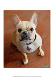 Sophie French Bulldog Posters por Robert Mcclintock