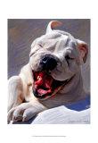Bull Dog Joyride Posters por Robert Mcclintock