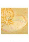 Shoreline Shells I Poster von Lorraine Vail