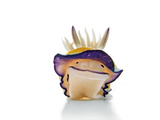A toxic chromodoris species of nudibranch Photographic Print by David Doubilet