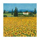 Farm Near Siena Premium Giclee-trykk av Hazel Barker
