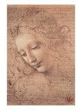 女の頭部(ラ・スカピリアータ) 1508年 高画質プリント : レオナルド・ダ・ヴィンチ