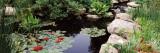 Water Lilies in a Pond, Sunken Garden, Olbrich Botanical Gardens, Madison, Wisconsin, USA Fotoprint van Panoramic Images,