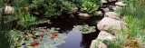 Water Lilies in a Pond, Sunken Garden, Olbrich Botanical Gardens, Madison, Wisconsin, USA Photographic Print by  Panoramic Images