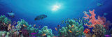 School of Fish Swimming Near a Reef, Indo-Pacific Ocean Fotografie-Druck von  Panoramic Images