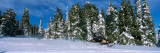 Snowmobiling in Yellowstone National Forest, CA Stampa fotografica