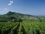 Vineyard on a Landscape with a Village in the Background, Roche De Solutre, Solutre Pouilly Lámina fotográfica