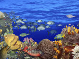 School of Fish Swimming Near a Reef Photographic Print