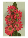 Red Cactus Flowers Affiche