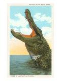 Gaping Alligator, Myakka State Park, Florida Giclée-Premiumdruck