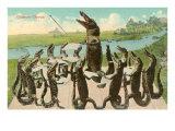 Alligator Chorus Prints