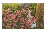 Azaleas, Jardín de los Cipreses, Florida Pósters