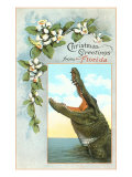 Christmas Greetings from Florida, Alligator Giclée-Premiumdruck