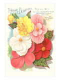 Seed Packet for Tuberous Begonias Posters