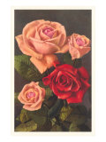 Red and Pink Roses Prints
