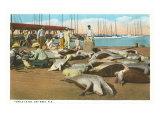 Turtle Catch, Key West, Florida Giclée-Premiumdruck