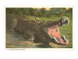 Florida Man-Eater, Alligator Giclée-Premiumdruck