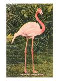 Flamingo Giclée-Premiumdruck