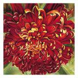 Chrysanthemum Prints by Selina Werbelow