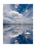 Swan Lake Explorations Fotografie-Druck von Steve Gadomski