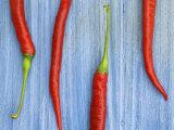 Red Chilli Peppers Chillies Freshly Harvested on Pale Blue Background Valokuvavedos tekijänä Gary Smith