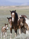 Wild Horse Mustang in Mccullough Peaks, Wyoming, USA Reproduction photographique par Carol Walker