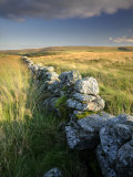 Dry Stone Wall and Moorland Grassland, Late Evening Light, Dartmoor Np, Devon, Uk. September 2008 写真プリント : ロス・ホディノット