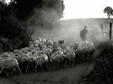The Shepherd Posters av Monika Brand