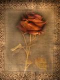 Rose on Fabric Plakater av Robert Cattan