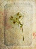 Clematis Copie Posters av Nathalie Diacci