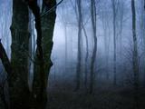 Moss Covered Trees in Dense Dog Kunst av Tommy Martin