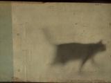 Blurred Cat Walking Kunst av Mia Friedrich