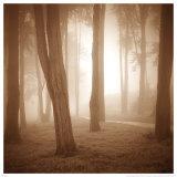 Woods Study II Poster by Alan Klug