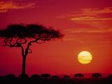 Wildebeest Migration, Masai Mara, Kenya Kunst av Dee Ann Pederson